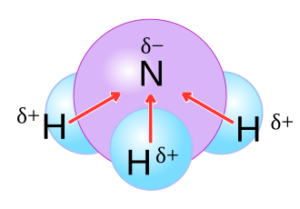 NH3 Structure
