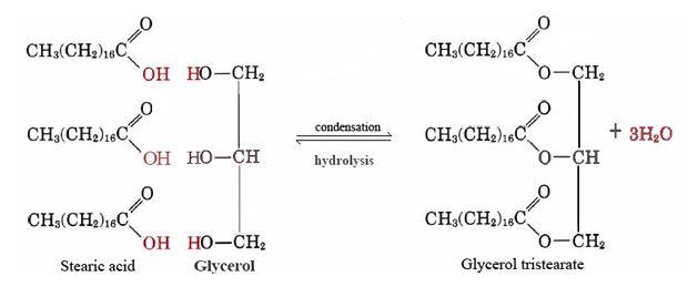 glycerol tristearate