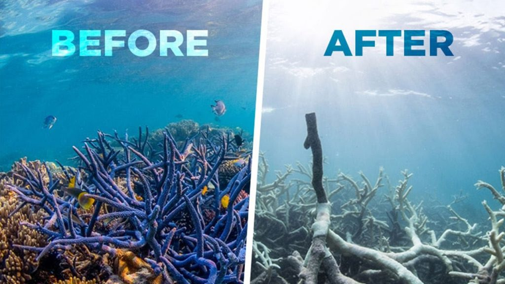 Coral Reefs Dying Before and After