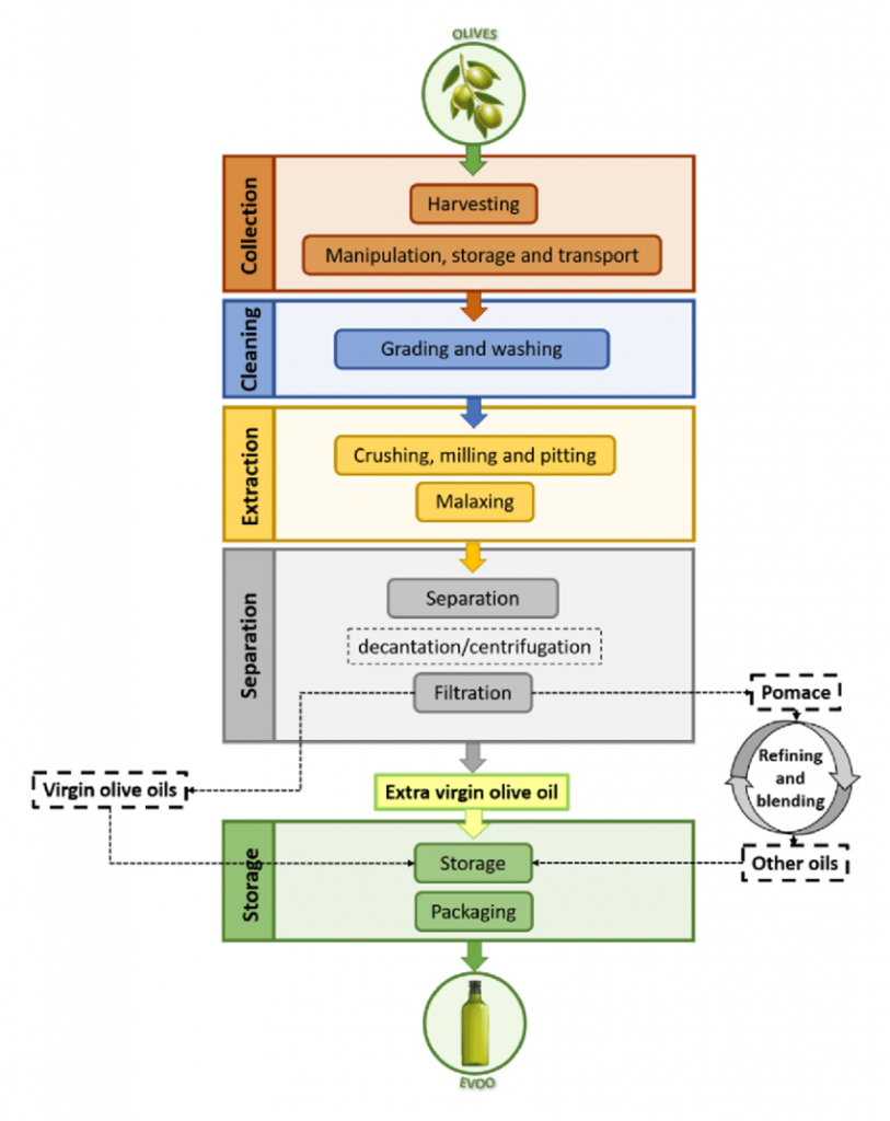 Olive Oil Processing Steps