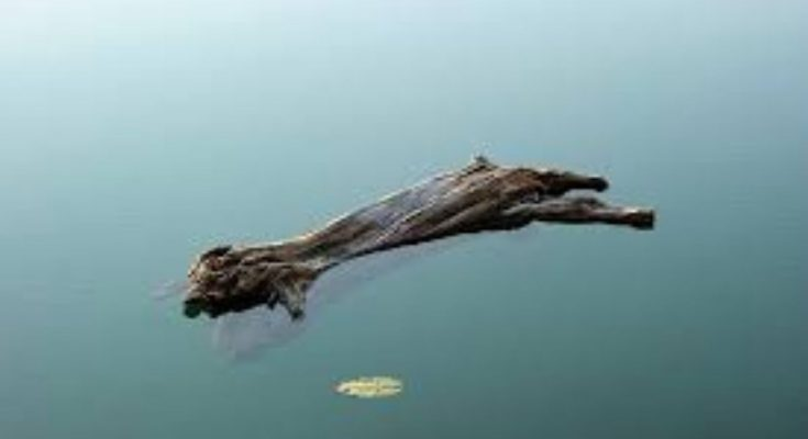 Why does wood Float on water