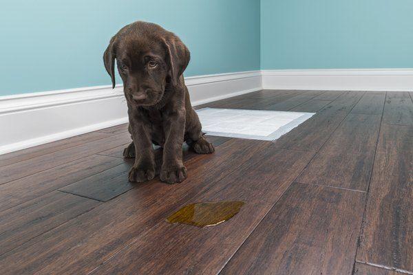remove urine odor from hardwood floors