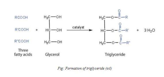 triglycerides formation