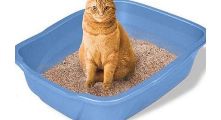Is cat litter Biodegradable